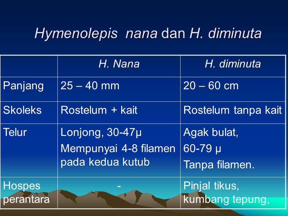 Hymenolepis nana dan H. diminuta H. NanaH. diminuta Panjang25 – 40 mm20 – 60 cm SkoleksRostelum + kaitRostelum tanpa kait TelurLonjong, 30-47µ Mempuny