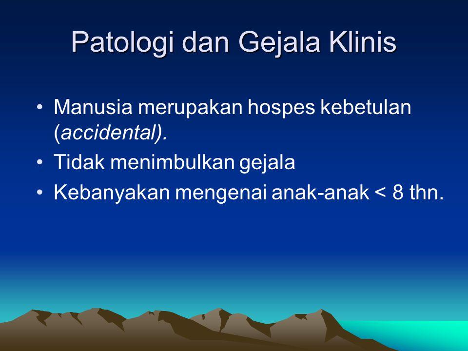 Patologi dan Gejala Klinis Manusia merupakan hospes kebetulan (accidental). Tidak menimbulkan gejala Kebanyakan mengenai anak-anak < 8 thn.