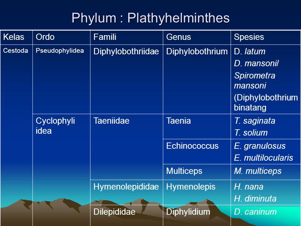 Siklus hidup D. caninum