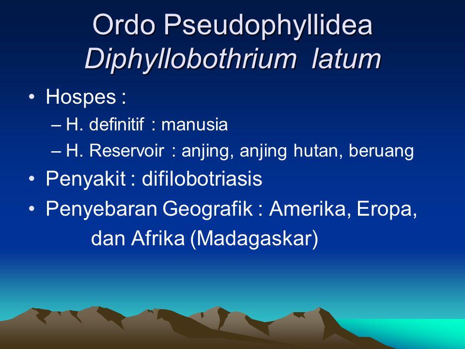 Ordo Pseudophyllidea Diphyllobothrium latum Hospes : –H.