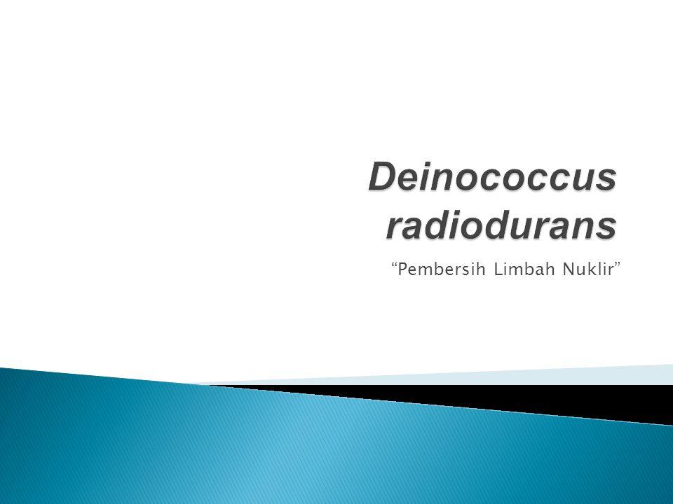 Kingdom: Bacteria Filum: Deinococcus-Thermus Bangsa: Deinococcales Marga: Deinococcus Jenis : D.