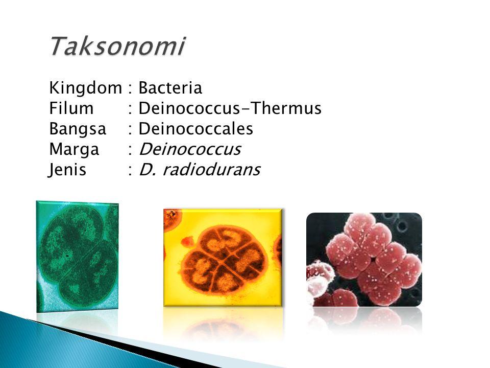 Kingdom: Bacteria Filum: Deinococcus-Thermus Bangsa: Deinococcales Marga: Deinococcus Jenis : D. radiodurans