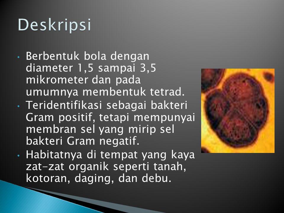 Berbentuk bola dengan diameter 1,5 sampai 3,5 mikrometer dan pada umumnya membentuk tetrad. Teridentifikasi sebagai bakteri Gram positif, tetapi mempu