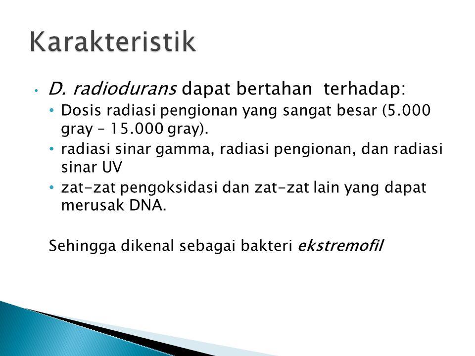D. radiodurans dapat bertahan terhadap: Dosis radiasi pengionan yang sangat besar (5.000 gray – 15.000 gray). radiasi sinar gamma, radiasi pengionan,