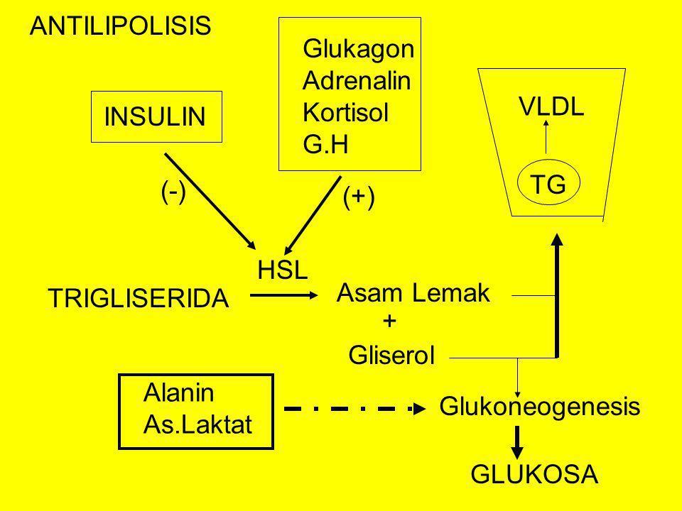TRIGLISERIDA Asam Lemak Gliserol + HSL INSULIN (-) Glukagon Adrenalin Kortisol G.H (+) TG VLDL Glukoneogenesis ANTILIPOLISIS Alanin As.Laktat GLUKOSA