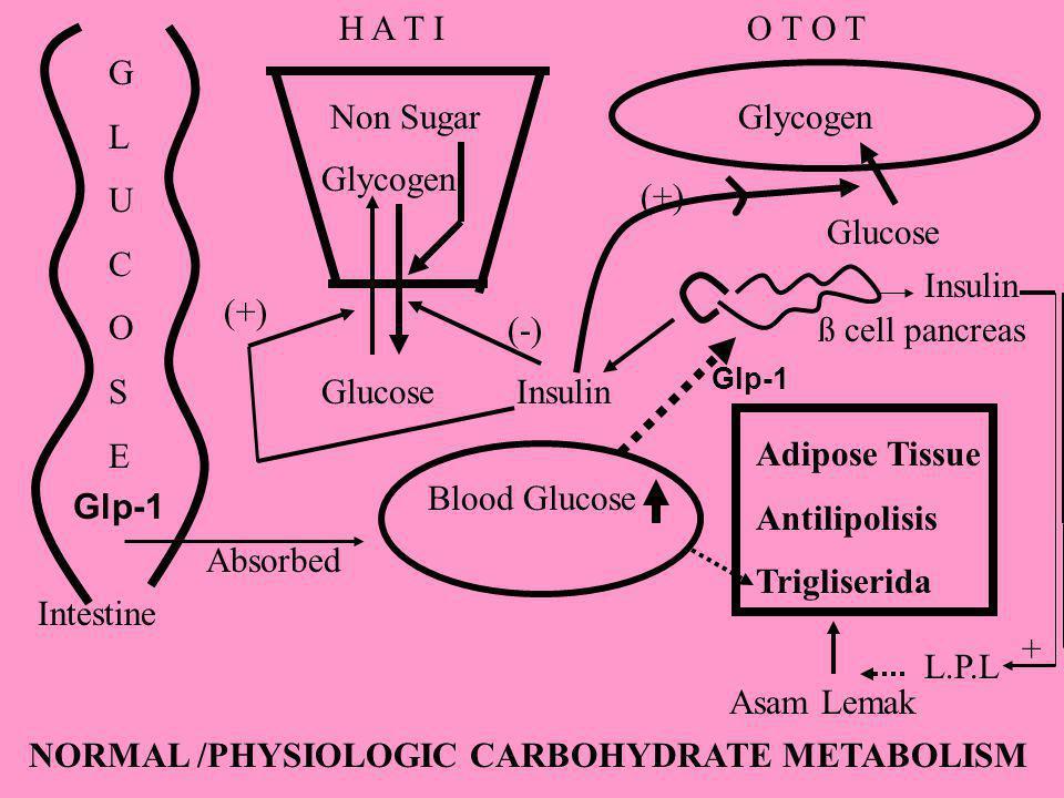 GLUCOSEGLUCOSE Intestine Absorbed Blood Glucose ß cell pancreas GlucoseInsulin (+) Glycogen Non Sugar (-) Glucose Glycogen (+) Adipose Tissue Antilipo