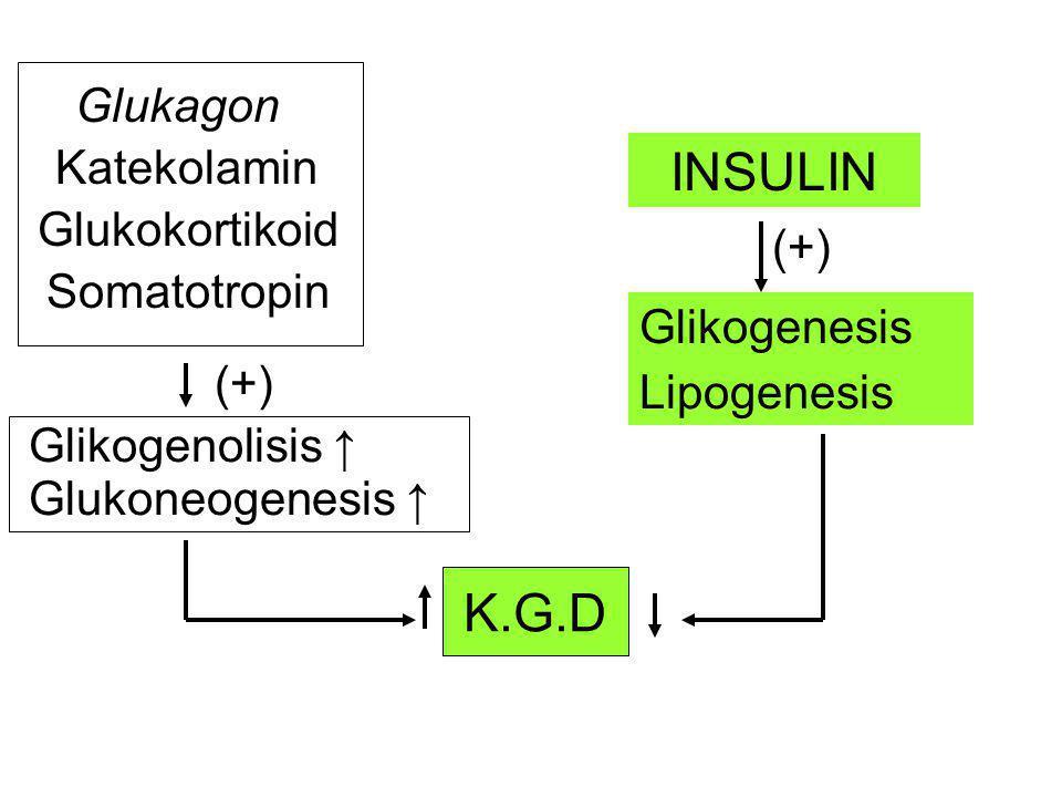 K.G.D INSULIN Glikogenesis Lipogenesis (+) Glukagon Katekolamin Glukokortikoid Somatotropin Glikogenolisis ↑ Glukoneogenesis ↑ (+)
