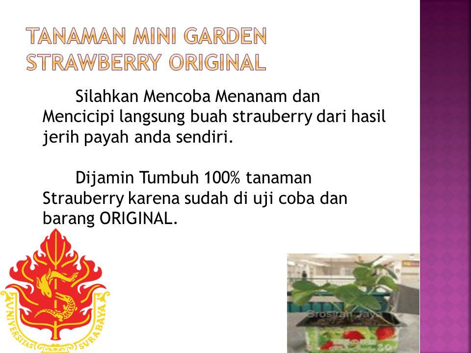 Silahkan Mencoba Menanam dan Mencicipi langsung buah strauberry dari hasil jerih payah anda sendiri.