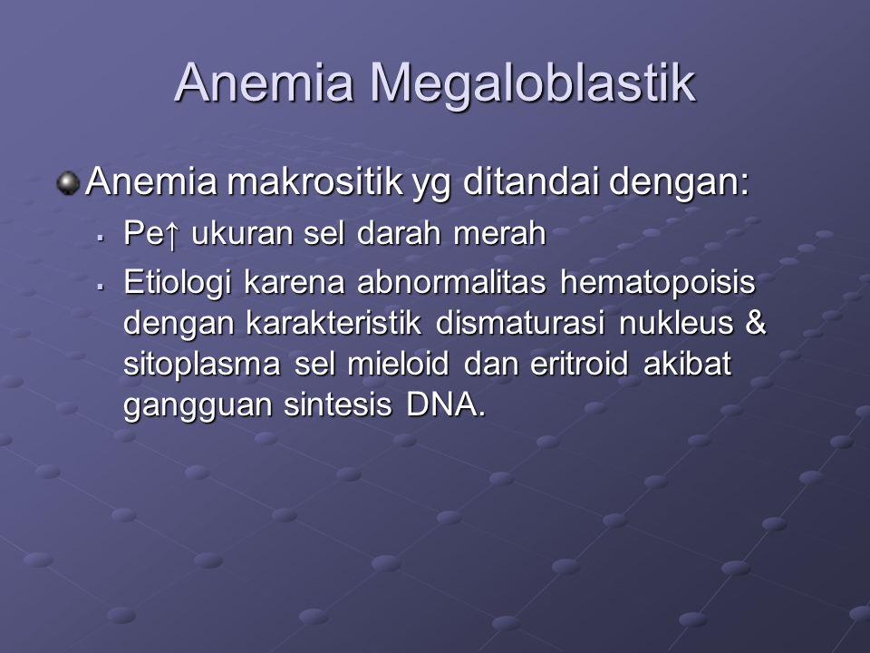 Anemia Megaloblastik Anemia makrositik yg ditandai dengan:  Pe↑ ukuran sel darah merah  Etiologi karena abnormalitas hematopoisis dengan karakteristik dismaturasi nukleus & sitoplasma sel mieloid dan eritroid akibat gangguan sintesis DNA.