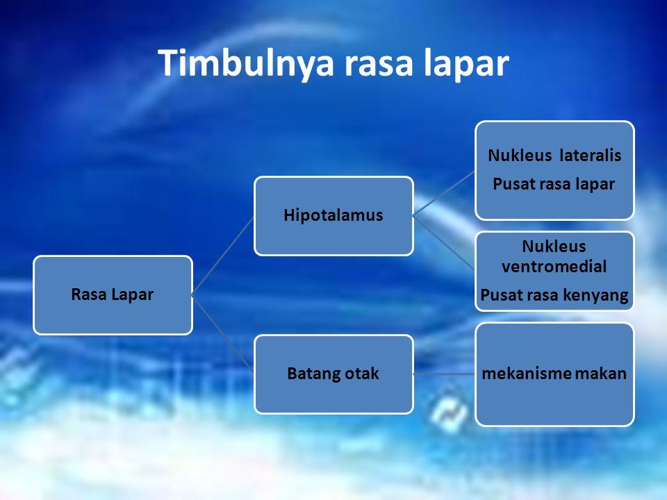 Timbulnya rasa lapar Rasa LaparHipotalamus Nukleus lateralis Pusat rasa lapar Nukleus ventromedial Pusat rasa kenyang Batang otak mekanisme makan