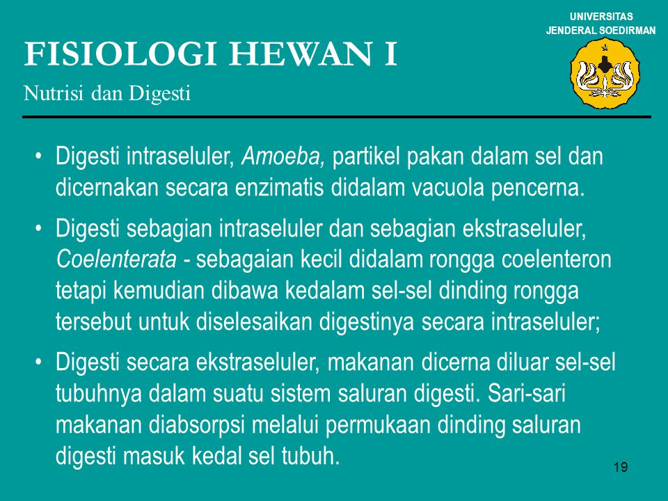 19 UNIVERSITAS JENDERAL SOEDIRMAN FISIOLOGI HEWAN I Nutrisi dan Digesti Digesti intraseluler, Amoeba, partikel pakan dalam sel dan dicernakan secara e