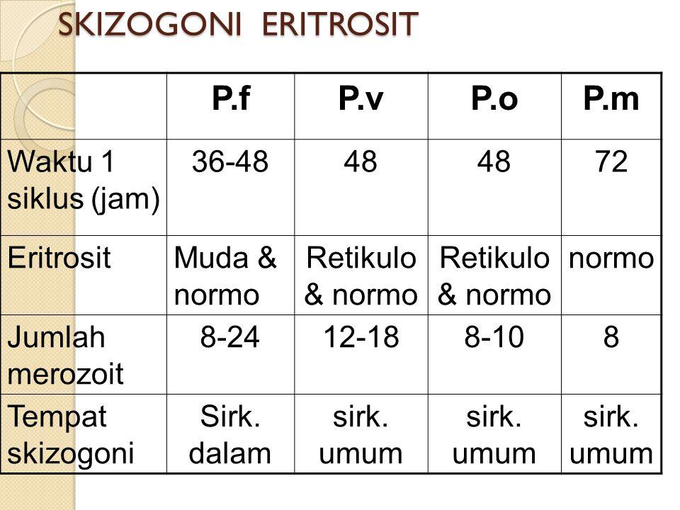 SKIZOGONI HEPAR SpesiesFase pra- eritrosit Besar skizon Jumlah merozoit P. vivax6-8 hari45 mikron10.000 P.falciparum5,5-7 hari60 mikron40.000 P. Malar
