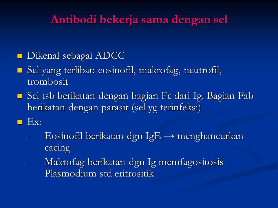 Antibodi Bekerja Sendiri Parasit intraseluler memerlukan reseptor pada permukaan sel hospes → untuk bisa masuk ke dalam sel Parasit intraseluler memer