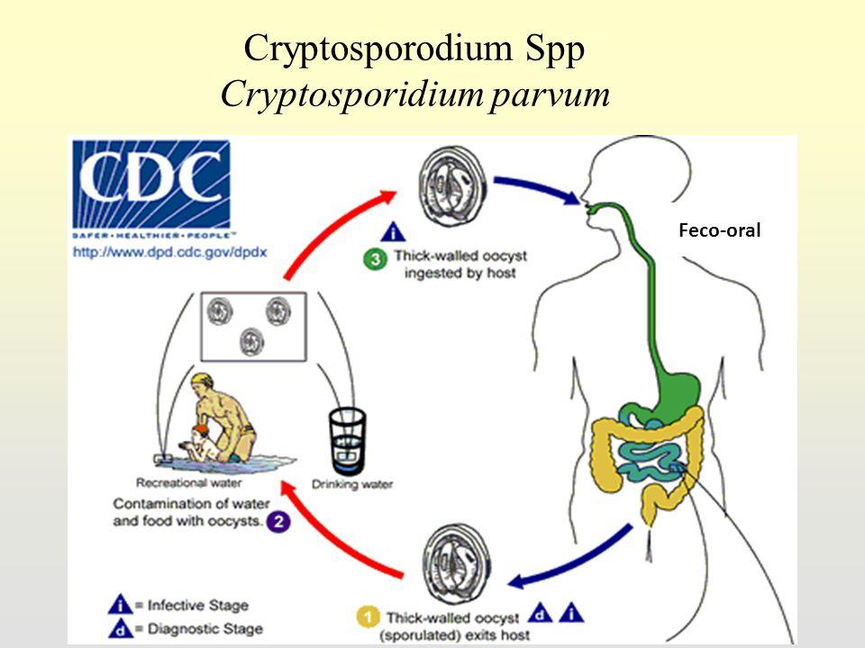 14 Cryptosporodium Spp Cryptosporidium parvum Feco-oral