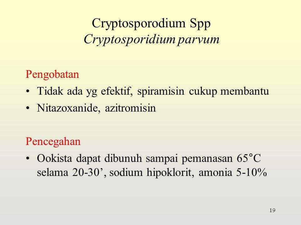 Pengobatan Tidak ada yg efektif, spiramisin cukup membantu Nitazoxanide, azitromisin Pencegahan Ookista dapat dibunuh sampai pemanasan 65°C selama 20-30', sodium hipoklorit, amonia 5-10% 19 Cryptosporodium Spp Cryptosporidium parvum
