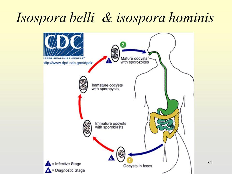 31 Isospora belli & isospora hominis