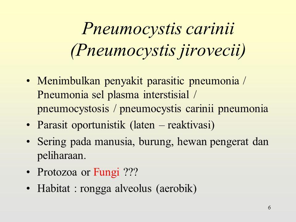 Pneumocystis carinii (Pneumocystis jirovecii) Menimbulkan penyakit parasitic pneumonia / Pneumonia sel plasma interstisial / pneumocystosis / pneumocystis carinii pneumonia Parasit oportunistik (laten – reaktivasi) Sering pada manusia, burung, hewan pengerat dan peliharaan.