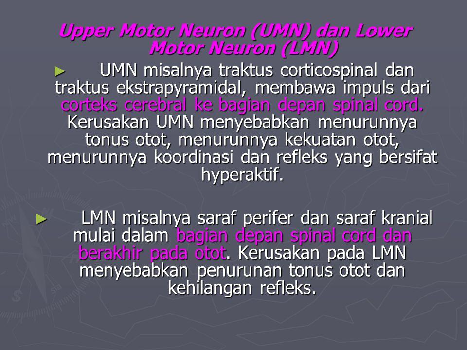 Upper Motor Neuron (UMN) dan Lower Motor Neuron (LMN) ► UMN misalnya traktus corticospinal dan traktus ekstrapyramidal, membawa impuls dari corteks ce