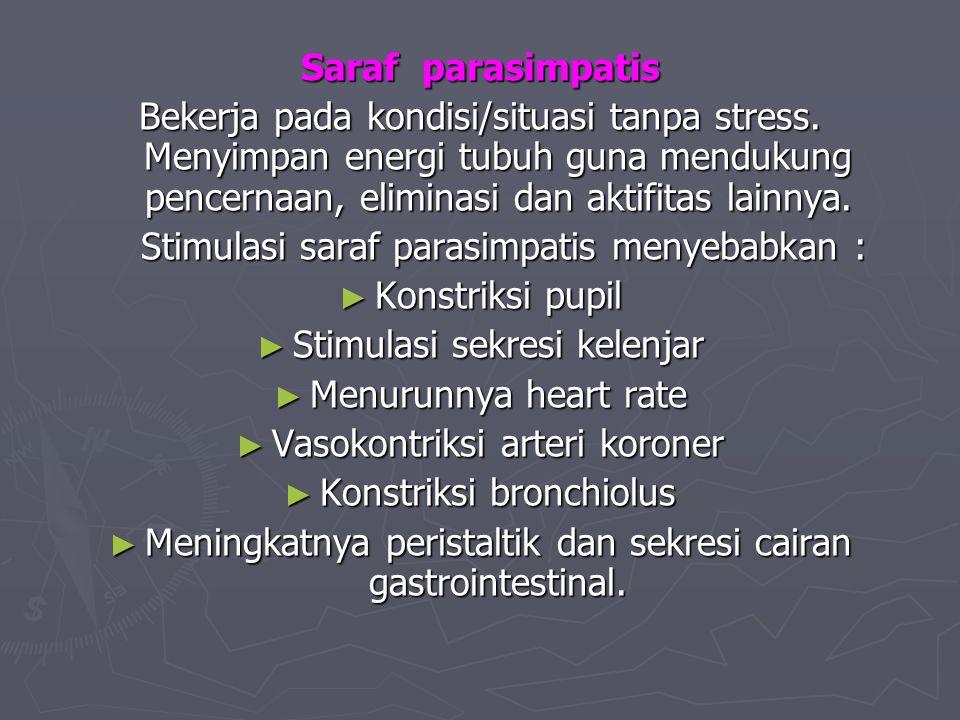 Saraf parasimpatis Bekerja pada kondisi/situasi tanpa stress. Menyimpan energi tubuh guna mendukung pencernaan, eliminasi dan aktifitas lainnya. Stimu