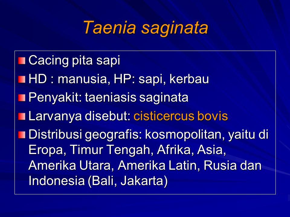 Taenia saginata Cacing pita sapi HD : manusia, HP: sapi, kerbau Penyakit: taeniasis saginata Larvanya disebut: cisticercus bovis Distribusi geografis: