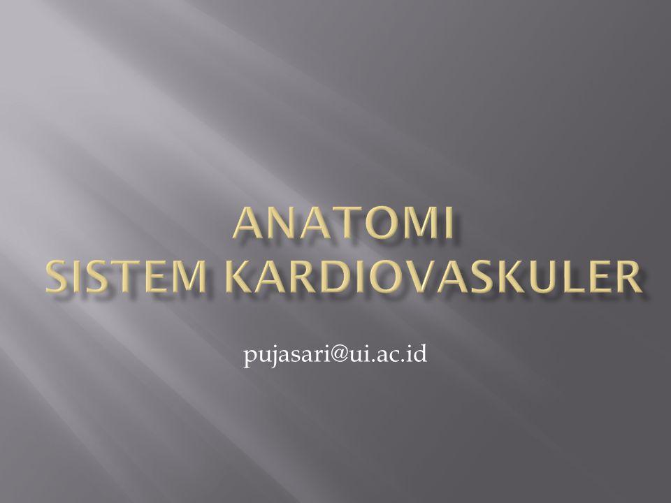 - peredaran darah kecil/sirkuit pulmonar -Peredaran darah besar/sirkuit sistemik )