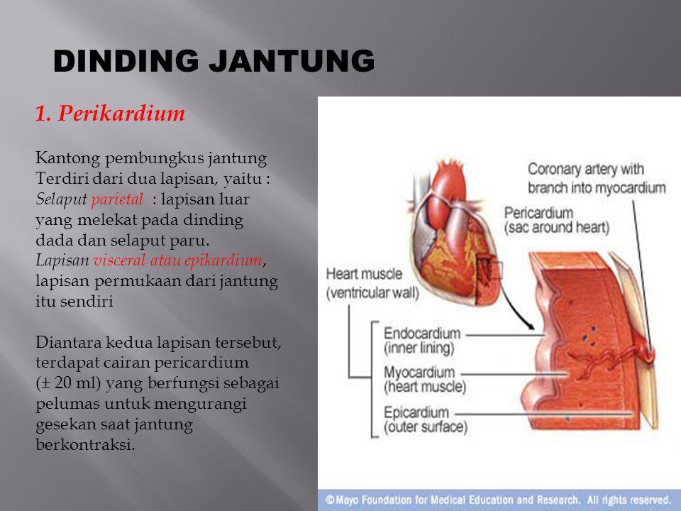 DINDING JANTUNG 2.Miokardium, Lapisan tengah yang merupakan lapisan otot jantung, mempunyai kemampuan untuk berkontraksi dan menghantarkan stimulus listrik untuk kontraksi otot.