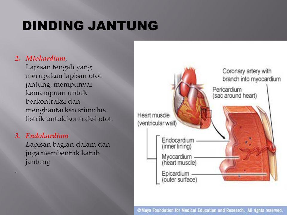 Right Atrium Left Atrium Right Ventricle Left Ventricle Anatomi Jantung (Ruang-Ruang Jantung)