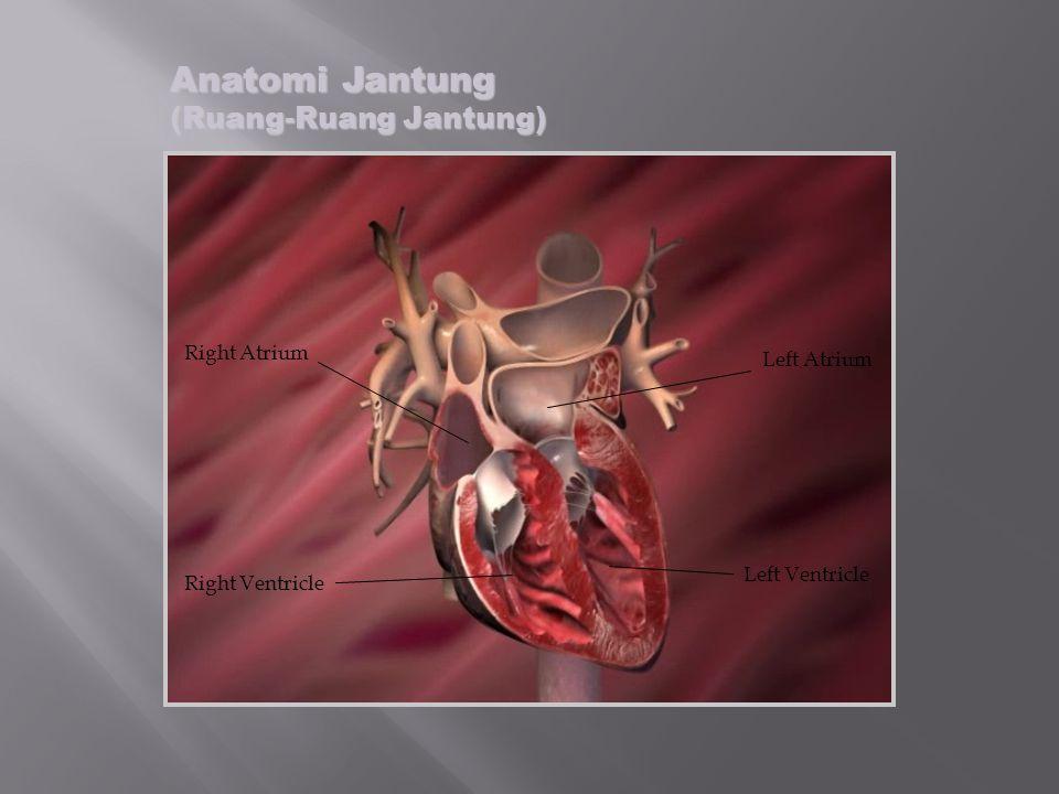 Anatomi Jantung (Katub- Katub Atrioventrikular) Tricuspid Valve Mitral Valve