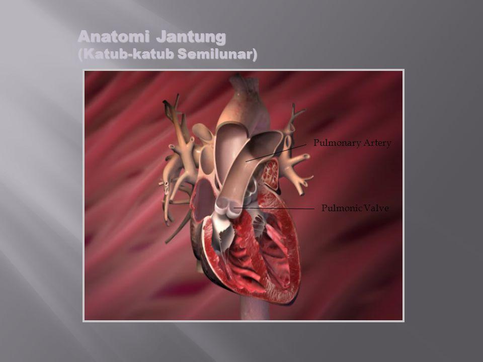Pulmonary Artery Pulmonic Valve Anatomi Jantung (Katub-katub Semilunar)
