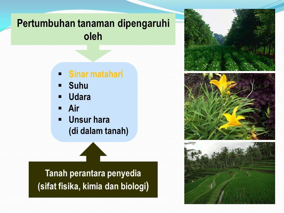 Pertumbuhan tanaman dipengaruhi oleh  Sinar matahari  Suhu  Udara  Air  Unsur hara (di dalam tanah) Tanah perantara penyedia (sifat fisika, kimia dan biologi )