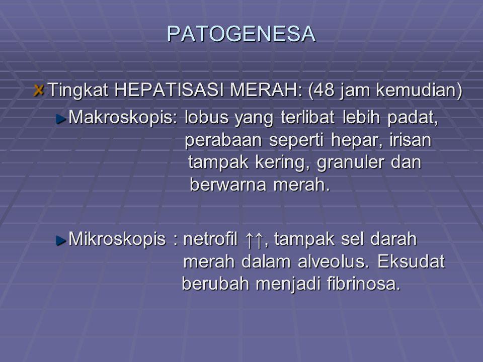 PATOGENESA Tingkat HEPATISASI MERAH: (48 jam kemudian) Makroskopis: lobus yang terlibat lebih padat, perabaan seperti hepar, irisan tampak kering, gra