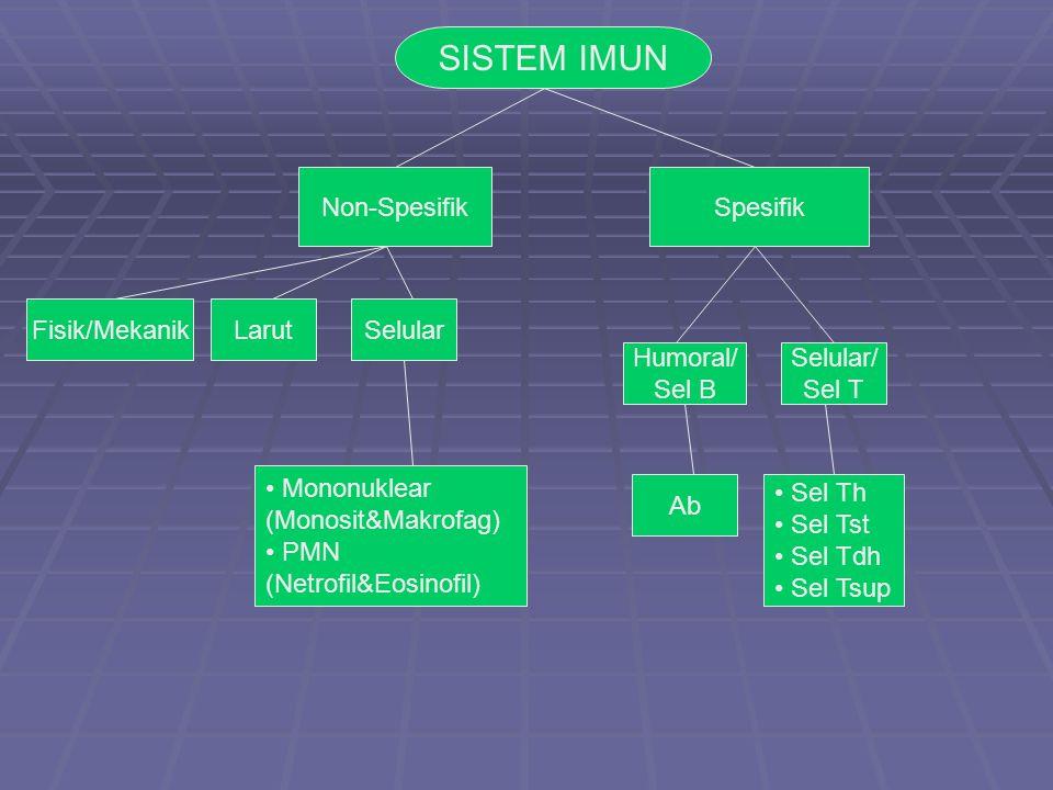 Non-SpesifikSpesifik Fisik/MekanikLarutSelular Humoral/ Sel B Selular/ Sel T Mononuklear (Monosit&Makrofag) PMN (Netrofil&Eosinofil) Ab Sel Th Sel Tst