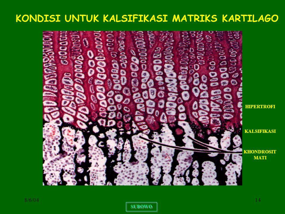 8/6/0414 SUBOWO KONDISI UNTUK KALSIFIKASI MATRIKS KARTILAGO KHONDROSIT MATI KALSIFIKASI HIPERTROFI