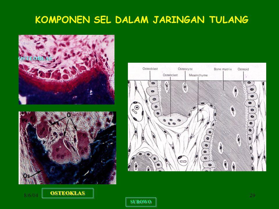 8/6/0429 KOMPONEN SEL DALAM JARINGAN TULANG SUBOWO OSTEOKLAS OSTEOBLAS