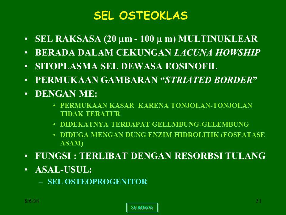 8/6/0431 SEL OSTEOKLAS SEL RAKSASA (20  m - 100  m) MULTINUKLEAR BERADA DALAM CEKUNGAN LACUNA HOWSHIP SITOPLASMA SEL DEWASA EOSINOFIL PERMUKAAN GAMB