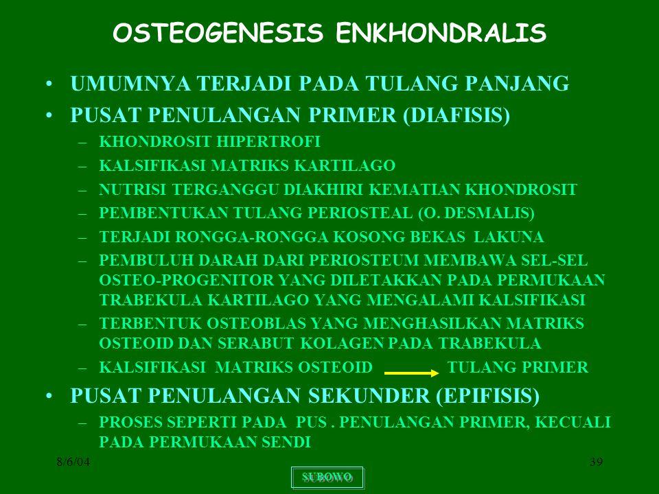 8/6/0439 OSTEOGENESIS ENKHONDRALIS UMUMNYA TERJADI PADA TULANG PANJANG PUSAT PENULANGAN PRIMER (DIAFISIS) –KHONDROSIT HIPERTROFI –KALSIFIKASI MATRIKS