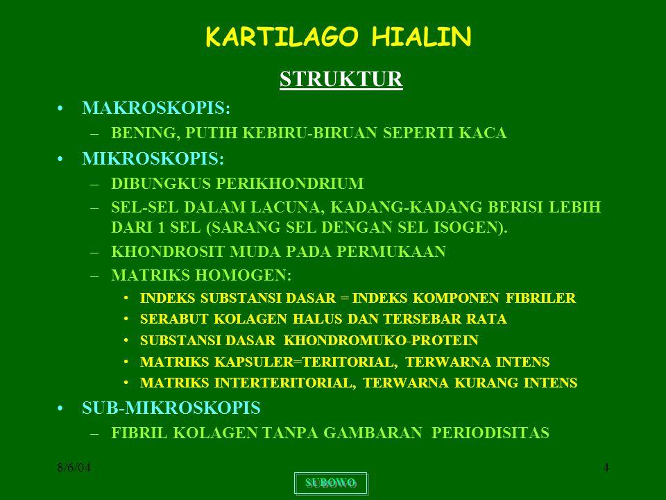 8/6/0415 KARTILAGO ELASTIS MAKROSKOPIS –WARNA KEKUNING-KUNINGAN, TIDAK TRANSPARAN, LENTUR MIKROSKOPIS –KHONDROSIT BULAT DALAM LAKUNA, SEL-SEL ISOGEN –SUBSTANSI INTERSELULER: JARINGAN PENUH DENGAN SERABUT ELASTIS BAGIAN PERMUKAAN LEBIH LONGGAR, MELANJUTKAN DALAM SERABUT-SERABUT PERIKHONDRIUM –SULIT MENGALAMI DEGENERASI DISTRIBUSI –CUPING TELINGA, DINDING SALURAN TELINGA LUAR, TUBA EUSTACHII, EPIGLOTTIS, dan sebagian LARYNX SUBOWO