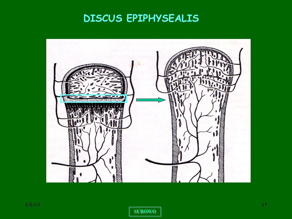 8/6/0445 SUBOWO DISCUS EPIPHYSEALIS