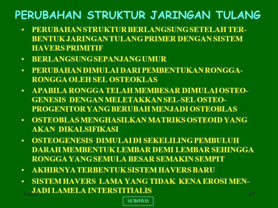 8/6/0447 PERUBAHAN STRUKTUR JARINGAN TULANG PERUBAHAN STRUKTUR BERLANGSUNG SETELAH TER- BENTUK JARINGAN TULANG PRIMER DENGAN SISTEM HAVERS PRIMITIF BE