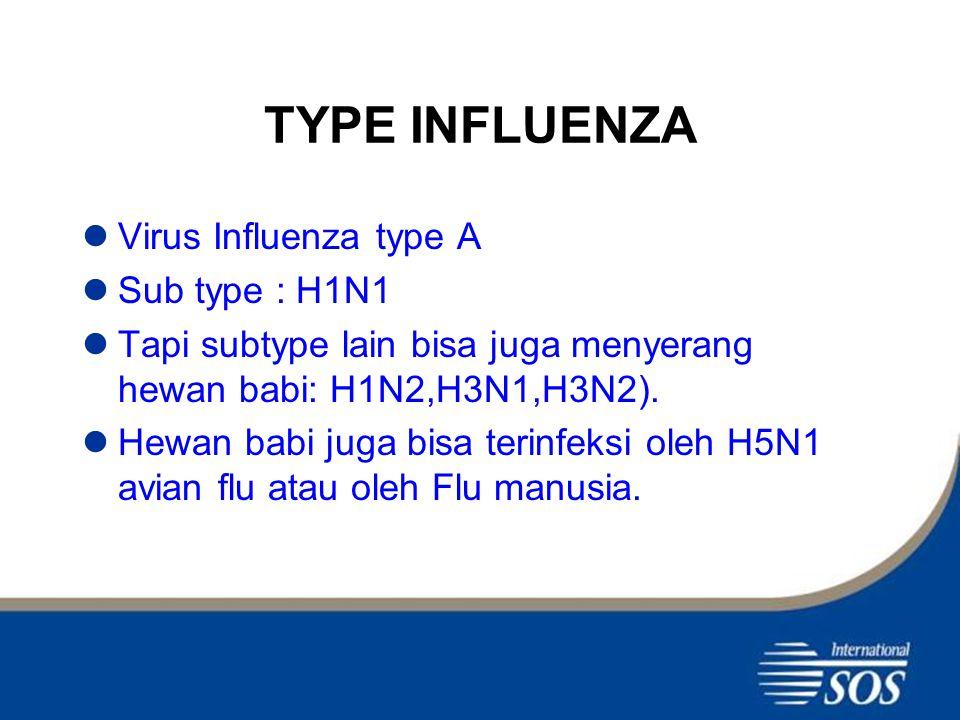 TYPE INFLUENZA Virus Influenza type A Sub type : H1N1 Tapi subtype lain bisa juga menyerang hewan babi: H1N2,H3N1,H3N2).