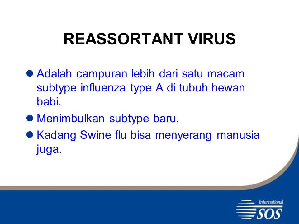 REASSORTANT VIRUS Adalah campuran lebih dari satu macam subtype influenza type A di tubuh hewan babi.