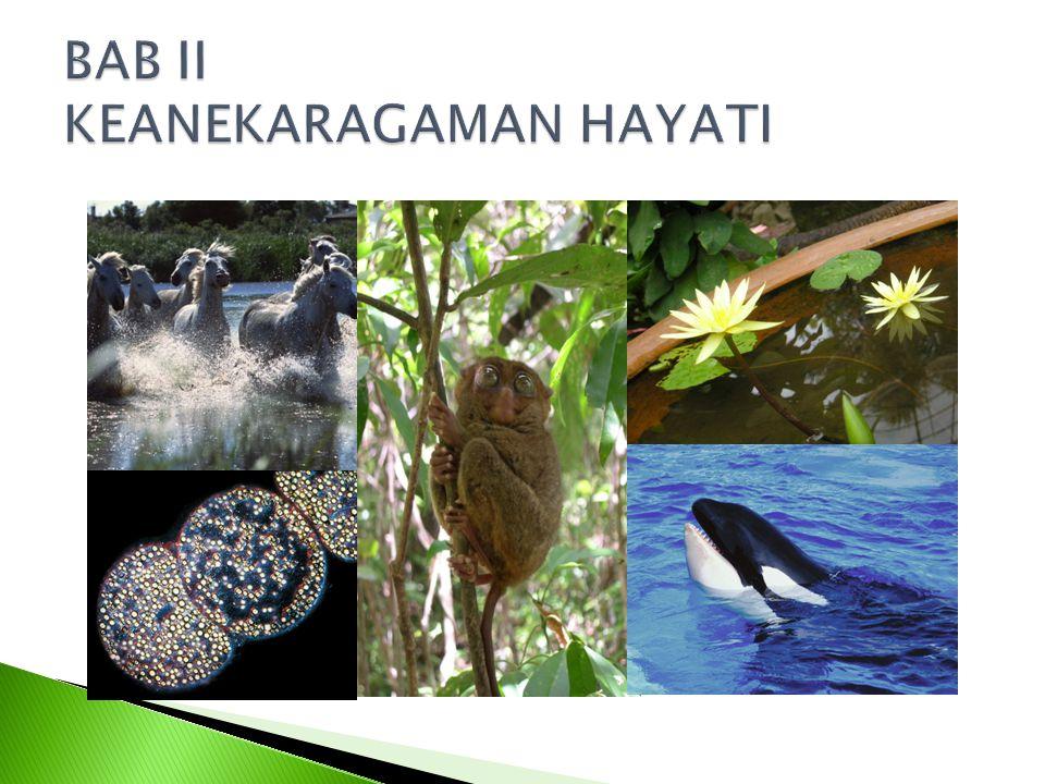 Keanekaragaman makhluk hidup, meliputi variasi bentuk, ukuran, warna dan sifat lain.