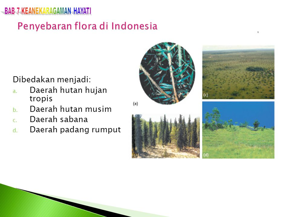 Dibedakan menjadi: a. Daerah hutan hujan tropis b. Daerah hutan musim c. Daerah sabana d. Daerah padang rumput