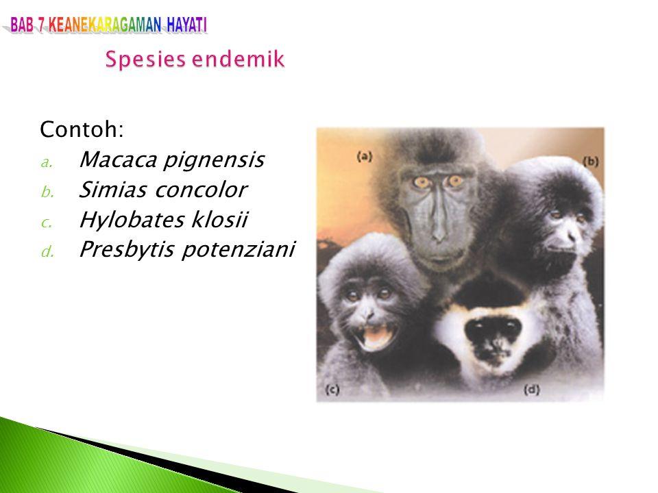 Contoh: a. Macaca pignensis b. Simias concolor c. Hylobates klosii d. Presbytis potenziani