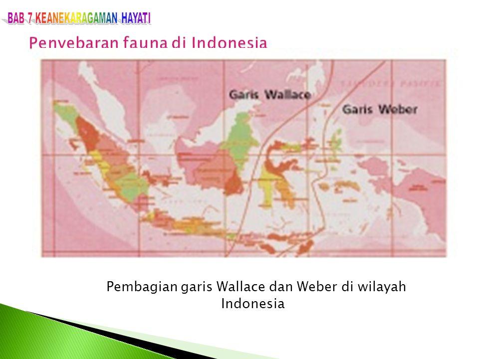 Pembagian garis Wallace dan Weber di wilayah Indonesia