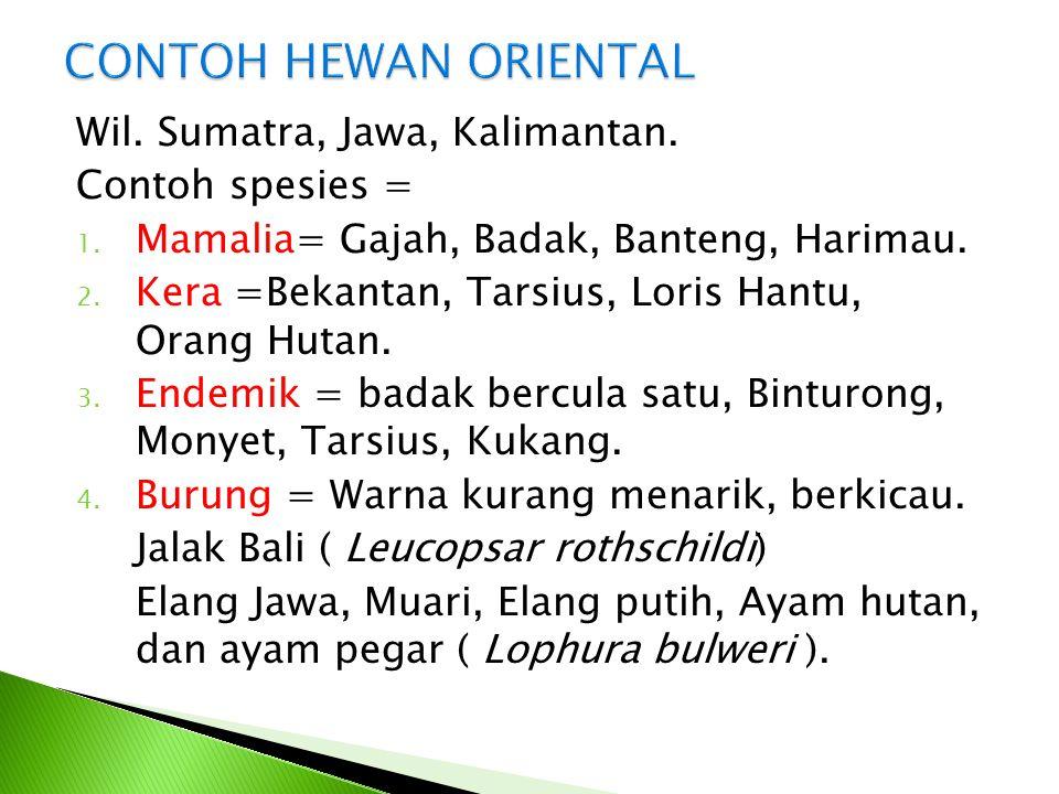 Wil. Sumatra, Jawa, Kalimantan. Contoh spesies = 1. Mamalia= Gajah, Badak, Banteng, Harimau. 2. Kera =Bekantan, Tarsius, Loris Hantu, Orang Hutan. 3.