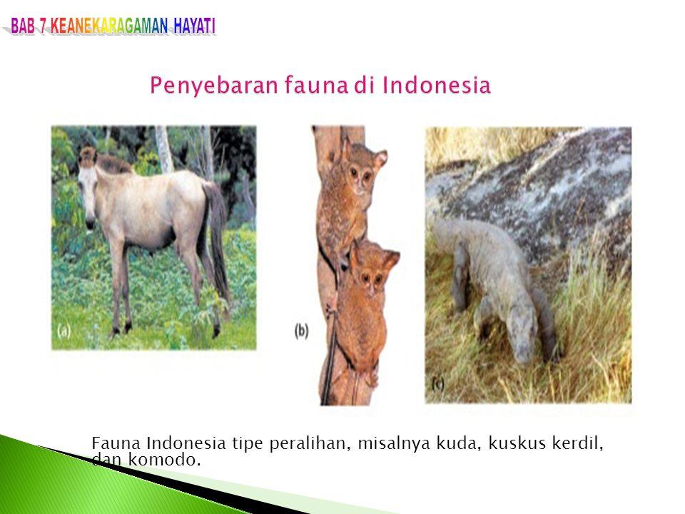 Fauna Indonesia tipe peralihan, misalnya kuda, kuskus kerdil, dan komodo.