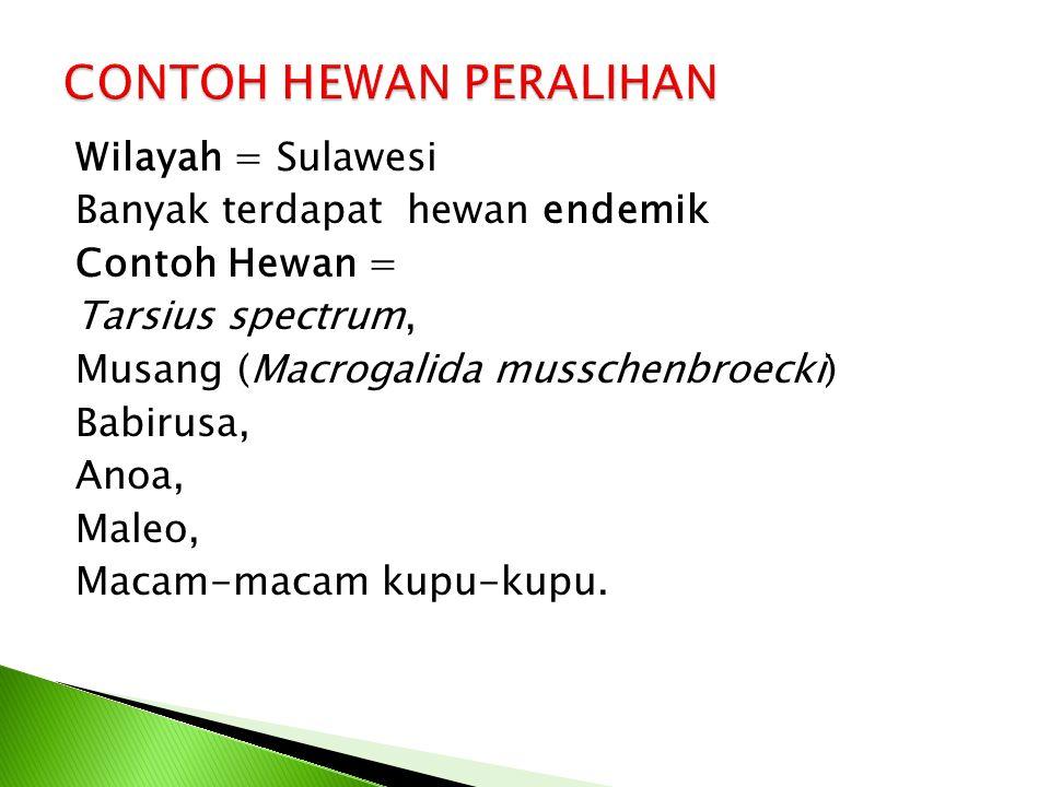 Wilayah = Sulawesi Banyak terdapat hewan endemik Contoh Hewan = Tarsius spectrum, Musang (Macrogalida musschenbroecki) Babirusa, Anoa, Maleo, Macam-macam kupu-kupu.