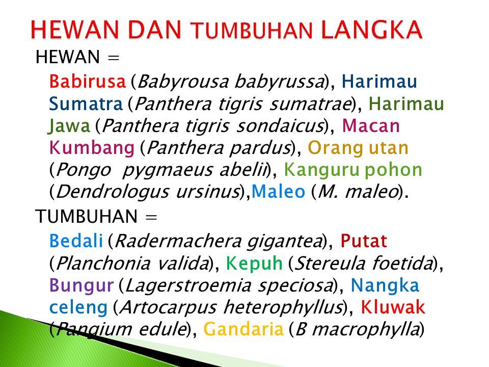 HEWAN = Babirusa (Babyrousa babyrussa), Harimau Sumatra (Panthera tigris sumatrae), Harimau Jawa (Panthera tigris sondaicus), Macan Kumbang (Panthera pardus), Orang utan (Pongo pygmaeus abelii), Kanguru pohon (Dendrologus ursinus),Maleo (M.