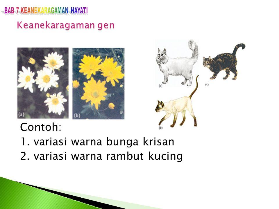 Contoh: 1. variasi warna bunga krisan 2. variasi warna rambut kucing